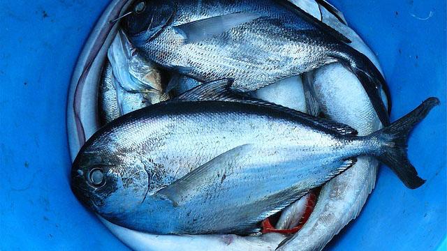 Balıklarda Kimyasal Miktar Analizi İle Tazelik Kontrolü